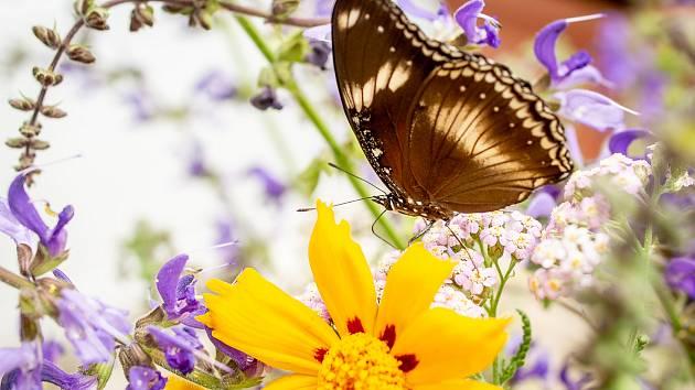 Výstava tropických motýlů v arboretu. Ilustrační foto.