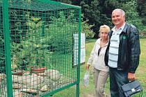 O wollemii, živoucí pozůstatek pravěku, je v Novém Dvoře velký zájem. Nicméně před nenechavýma rukama některých návštěvníků chrání vzácný strom pevná mříž.