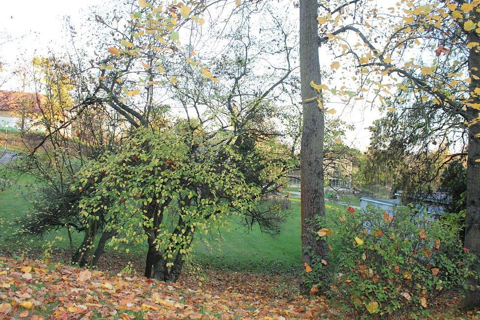 Podzim v Arboretu Nový Dvůr.