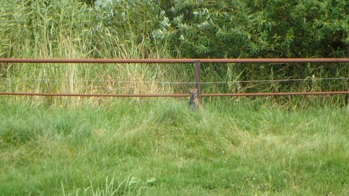 Hasiči z Opavska lovili rychlou zvěř – býčky i klokana. A zachránili vlaky.