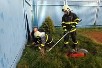 Srnu přijeli zachránit hasiči.