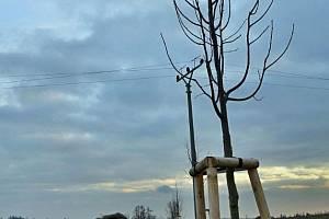 Obec se před několika dny pochlubila na návrší Sovinec novým lipovým stromořadím. Alej slouží jako devět set metrů dlouhý větrolam s protierozními účinky, chránící okolní pozemky proti přírodním živlům.