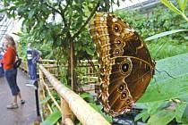 Motýli budou od soboty největším lákadlem Arboreta v Novém Dvoře.