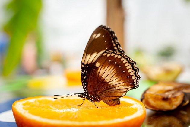 Kouzlu živých motýlů vArboretu Nový Dvůr, 12.června 2019.