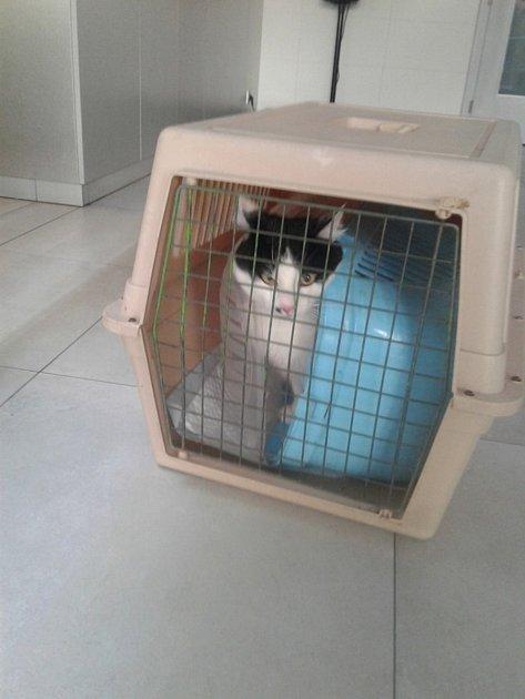 Agresivní kočka zaútočila na svou majitelku, odolala iuspávací pistoli.