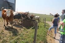 Farma Kružberk je plně ekologická. Naše redakce se při sobotní prohlídce přesvědčila o tom, co všechno toto adjektivum obnáší a co musíte udělat pro to, abyste se takovým statusem vůbec mohli pyšnit.
