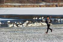 Na přípravě proměny Stříbrného jezera na rekreační centrum se pracuje od roku 2005. Podle některých odhadů by se mohlo začít s pracemi letos.