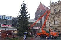 Vánoční strom ve čtvrtek dopoledne stavěli na Horním náměstí v Opavě. A to konkrétně pracovníci Technických služeb Opava, s. r. o.