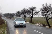 Suché a nemocné stromy se budou kácet před Raduní.