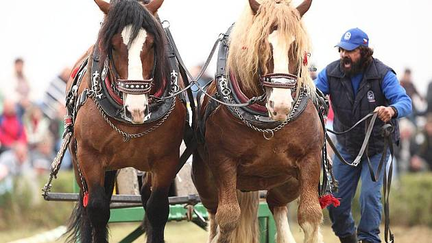 Takto vypadalo soutěžní klání chladnokrevných koní v Klokočově loni v září.