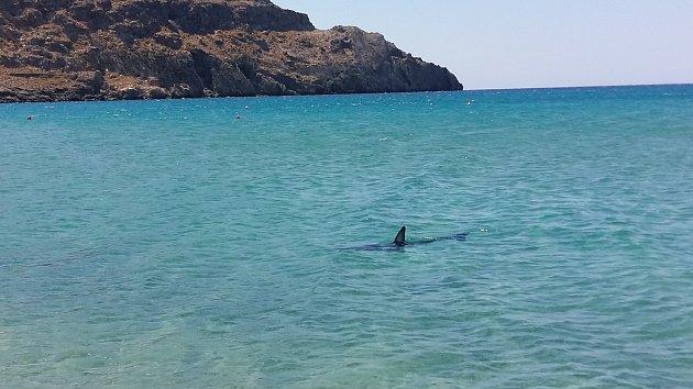 Kvůli žralokovi vblízkosti pláže museli plavčíci vyzvat asi pět lidí, aby urychleně vylezli zvody ven.