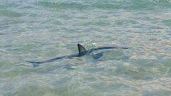Kvůli žralokovi v blízkosti pláže museli plavčíci vyzvat asi pět lidí, aby urychleně vylezli z vody ven.