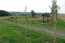 Jeřabinová alej u Hlubočce byla vysazena v minulém roce. Přiložená fotografie vznikla nedlouho po výsadbě. Před nedávnem někdo devět jeřabin polámal.
