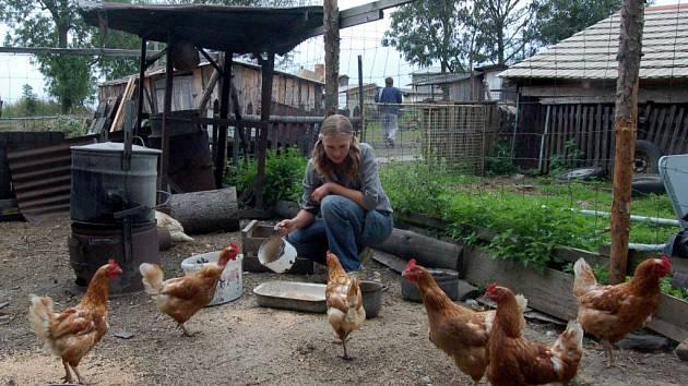 Chovatelé drůbeže na Opavsku se ve většině případů ptačí chřipky neobávají.