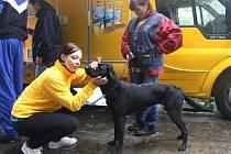 Jarmila Stiborská (vpravo) přivedla v Opavě k psímu zubaři prohlédnout svého křížence labradora Pattiho, kterého si teprve před týdnem dovedla domů z útulku.