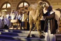 Velkým zpestřením zahájení Tříkrálové sbírky v Opavě byl i živý velbloud.