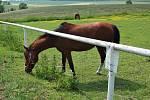 Koně v Albertovci.