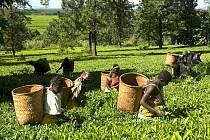 Fair trade pomáhá zemědělcům zlepšit jejich životní podmínky v zemích třetího světa.