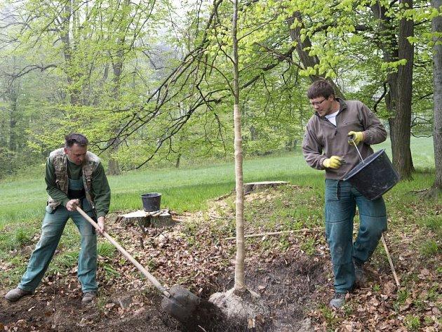 Vysazování nových stromů v parku u zámku v Hradci nad Moravicí bylo zahájeno v minulém týdnu.