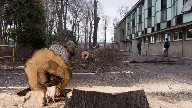 Ohlášenou revitalizaci Městských sadů zahájilo město v listopadu loňského roku a během zimy z nich budou odstraněny všechny staré a nemocné stromy.
