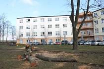 V areálu Slezské nemocnice se kácí.