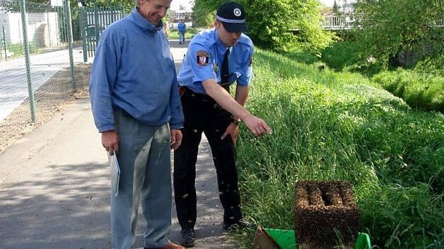 Při odchytu včelstva zajišťovala bezpečnost kolemjdoucích městská policie.