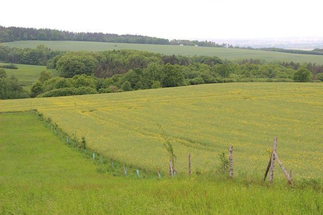 Rozkouskovaná krajina. Myslivci ji považují za prospěšnou, zemědělci za komplikaci.