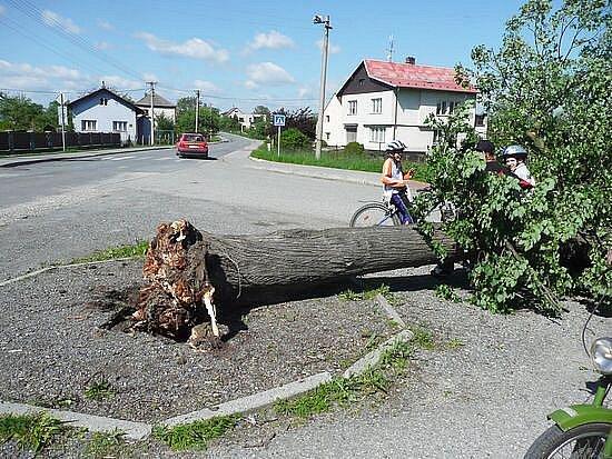 Stromy, které padly za oběť projektu Regenerace zeleně, budou využity jako surovina pro umělecké sochaře.