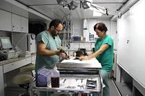 Vojenští veterináři v nové mobilní ambulanci zrovna ošetřují zraněného psa.