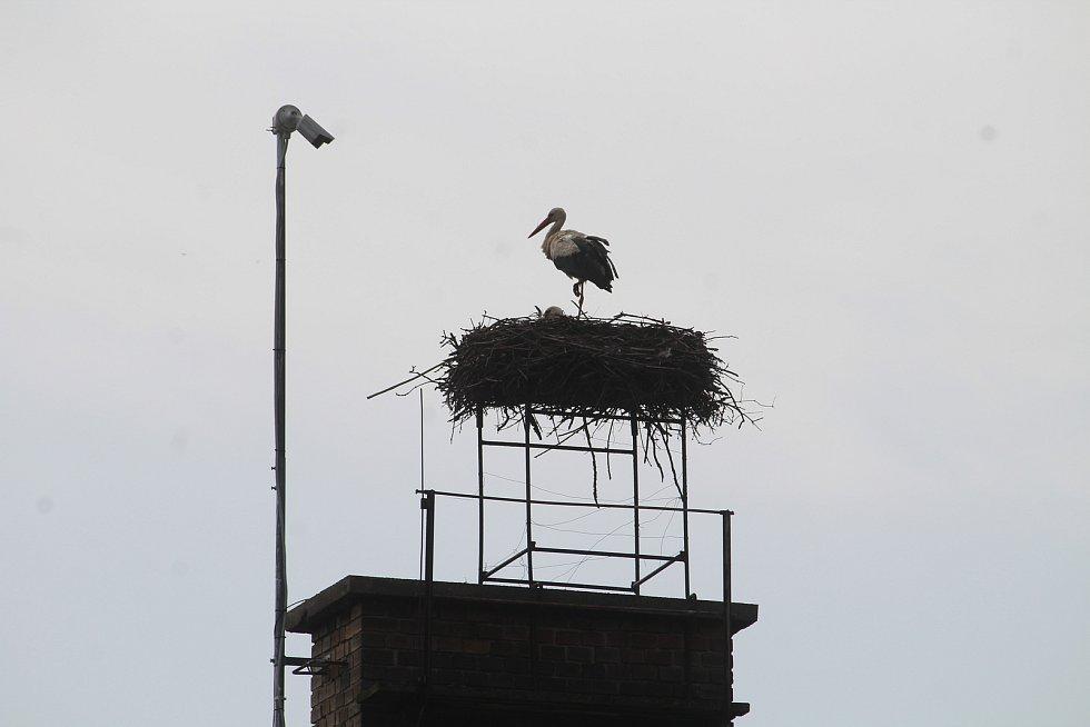 Čapí hnízdo na mateřské škole v Melči.