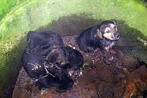 Odložená štěňata. Ta byla ve středu ráno nalezena v hlučínské části Rovniny.