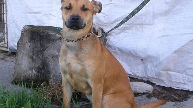 Patnáct psů čeká na nového pána v záchytných kotcích Městské Policie Vítkov.