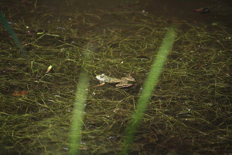 Raduňský mokřad je útočištěm mnoha druhů.
