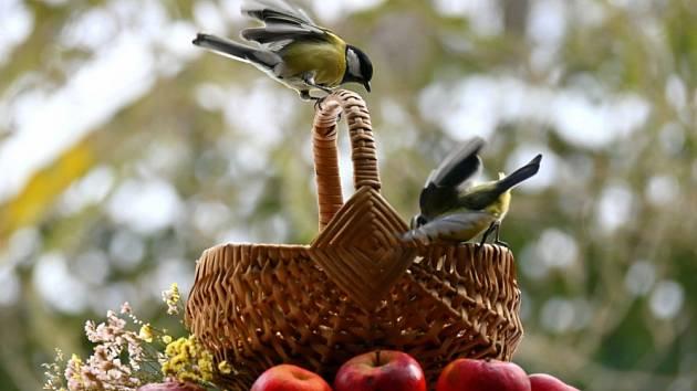 Ptačí říše v zimě.