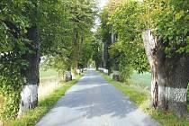 Stromořadí v lokalitě Radkov-Dubová bylo před nedávnem ošetřeno dobrovolníky ze sdružení Za Opavu a Občanského sdružení Radkov.