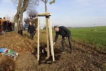 V den státního svátku 17. listopadu vysadili zástupci Moravskoslezského kraje třicet stromů v aleji v Radkově na Opavsku. Foto: Archiv Moravskoslezského kraje
