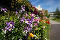 V těchto dnech láká Arboretum Nový Dvůr své návštěvníky na výstavu balkonových rostlin. Pokud hledáte inspiraci pro váš balkon, okno nebo terasu, můžete ji najít právě zde.