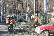 Provoz na jedné z nejvytíženějších dopravních tepen v Opavě, Olomoucké ulici, v pátek před polednem výrazně zkomplikoval vzrostlý strom, který se pravděpodobně následkem silného větru zlomil a zřítil přímo do silnice, kudy denně projíždí stovky aut.