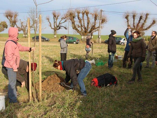 Dubová je bohatší o nová stromořadí. Před pár dny tam totiž dobrovolníci vysázeli dvě nové jednořadé aleje ovocných stromů.