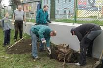 Do přípravy školní zahrady na novou výsadbu se zapojili žáci i jejich rodiče.