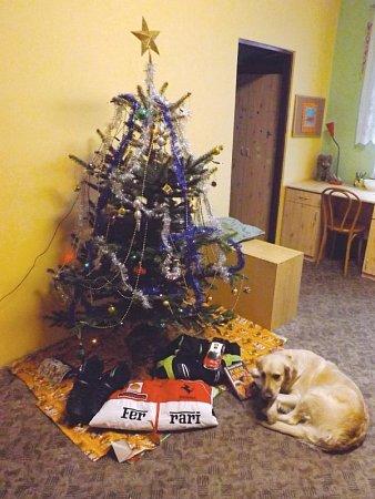 Vánoční stromek vKlokánku a pod ním dárky, které dětem darovali lidé. Střeží je fenka Lusy, kterou její předchozí majitel týral a dnes je pro děti zKlokánku nejlepším přítelem.