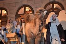 Tři králové se nepůjdou ani letos poklonit Ježíškovi bez velbloudice Šemi.