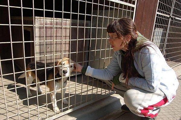 Každý pes vútulku je vděčný za podrbání.