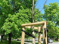 Neznámý vandal pořezal kůru nově vysazených stromů na sídlišti Rovniny.