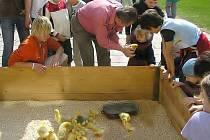 Děti a zvířáta si pokaždé dobře rozumějí. Loni navštívilo Den mláďat přes čtyři tisíce návštěvníků.