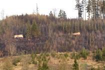 Sedm hektarů lesa v pátek zasáhl požár v Budišově nad Budišovkou na Opavsku.