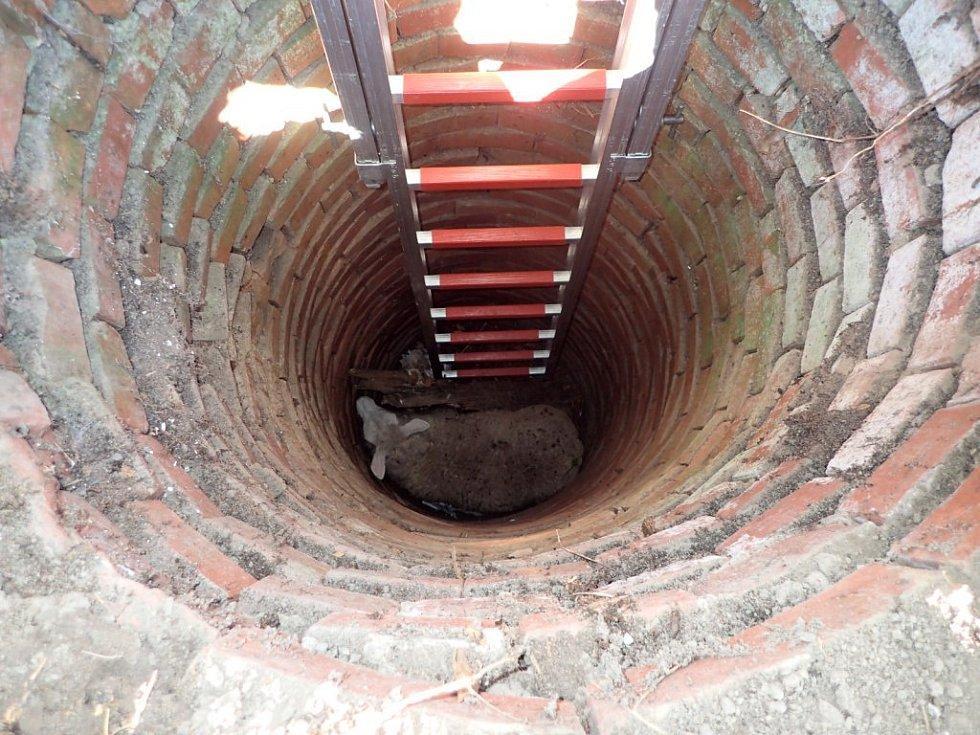 Záchrana ovce ze studny v Bělé na Opavsku.