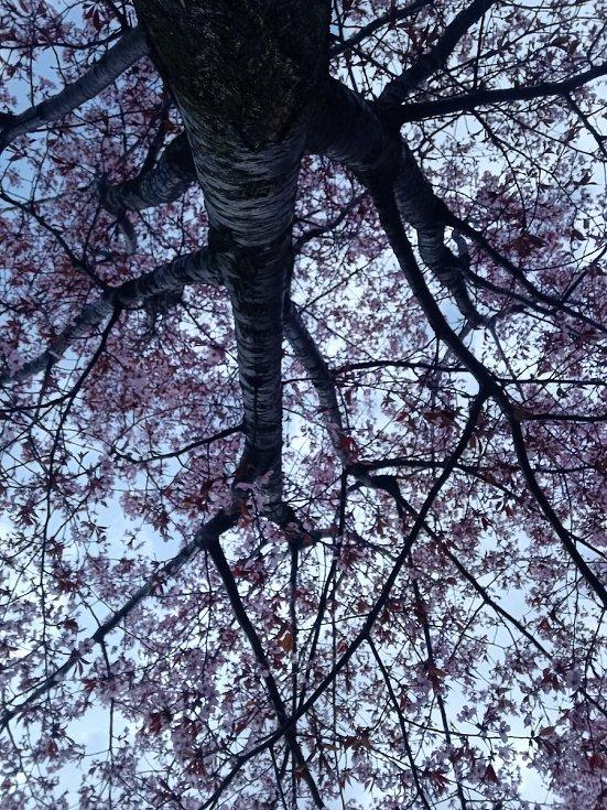 Krásné záběry z Opavy.