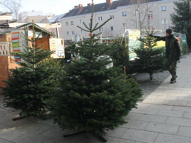 Stromky jsou již na mnoha místech v prodeji.