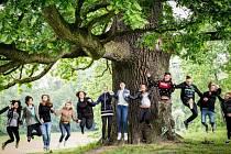 Stáří dubu ze Šilheřovic se odhaduje na 460 let.